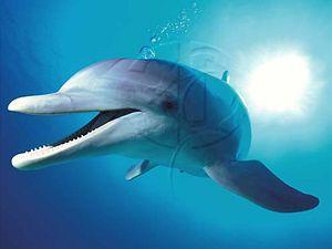 Delfín.