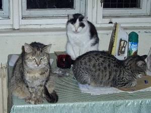 kočky na stole