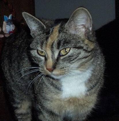kočka Rézi